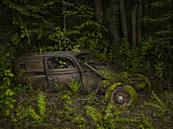 Paradise Parking: Automobiles Reclaimed by Nature plants nature cars