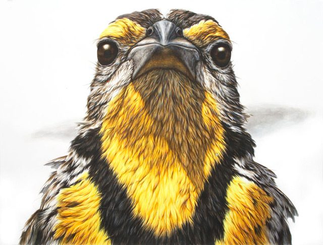 Remarkable Animals Painted in Ink by George Boorujy