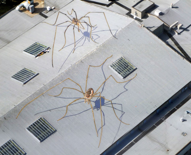 Enormous Daddy Long Legs Overtake the Seattle Center Armory  street art spiders Seattle murals