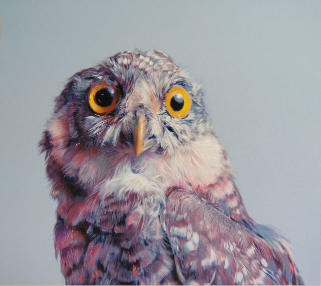 Colored Owl pencil Drawings by John Pusateri