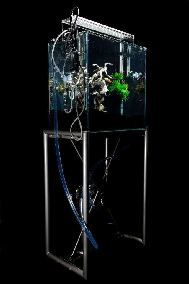 An Underwater Bonsai Tree by Makoto Azuma trees plants