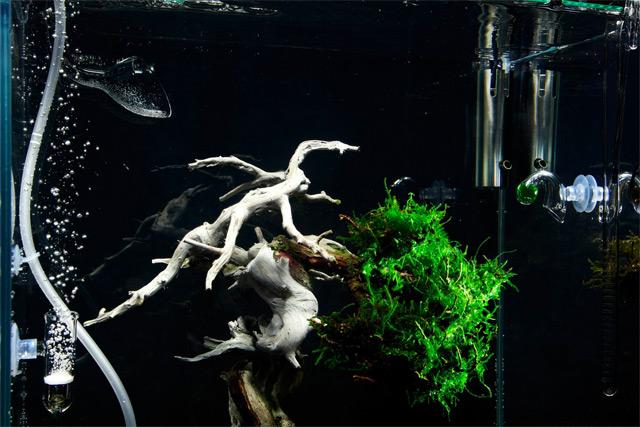 An Underwater Bonsai Tree by Makoto Azuma