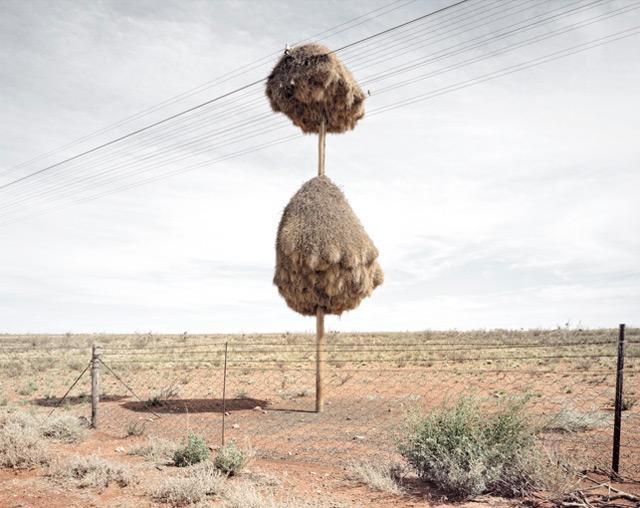 nest-8