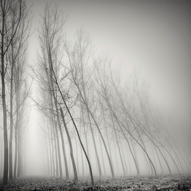 Long Exposure Tree Landscapes by Pierre Pellegrini | Colossal