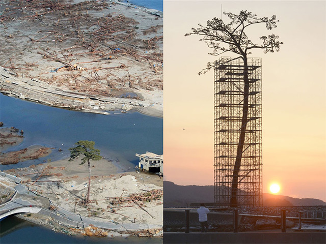 Japan Erects Massive Sculpture of the Last Standing Tree from a Forest Destroyed by the 2011 Tsunami
