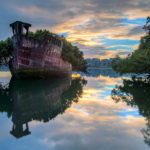 A 102-Year-Old Transport Ship Sprouts a Floating Forest