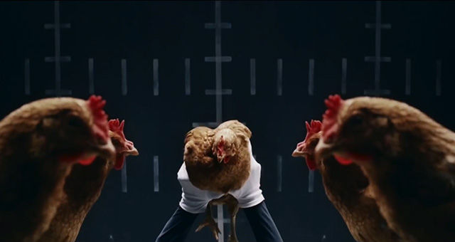Video Demonstrates a Chickens Ability to Stabilize Its Head humor chickens birds advertising