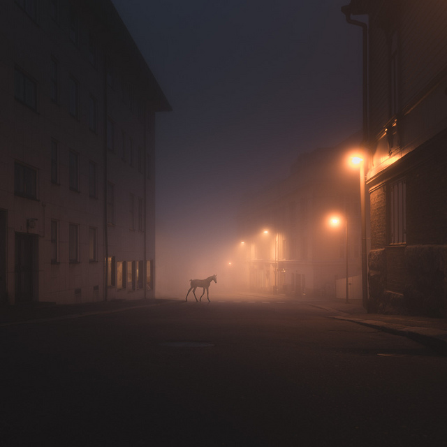 Wild Animals Stalk the Streets of a Small Town in Finland at Night night Finland birds animals