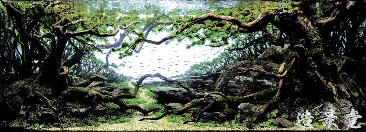 The Incredible Underwater Art of Competitive Aquascaping plants fish aquariums