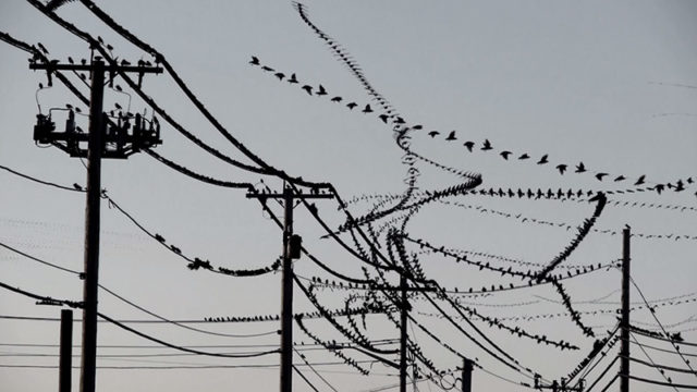 Amazing Video Clips Visually Isolate the Flight Paths of Birds