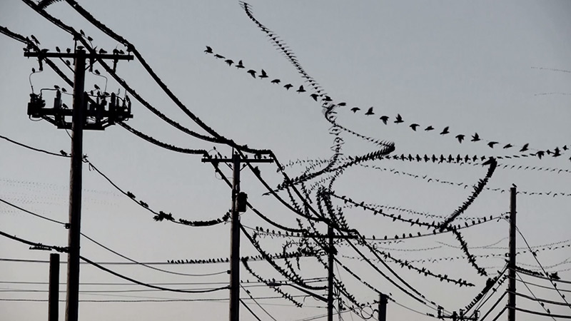 Amazing Video Clips Visually Isolate the Flight Paths of Birds | Colossal