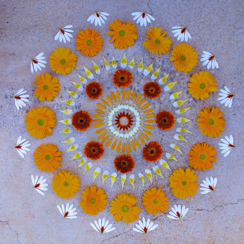 danmala565gerbera daisy primrose alstroemeria