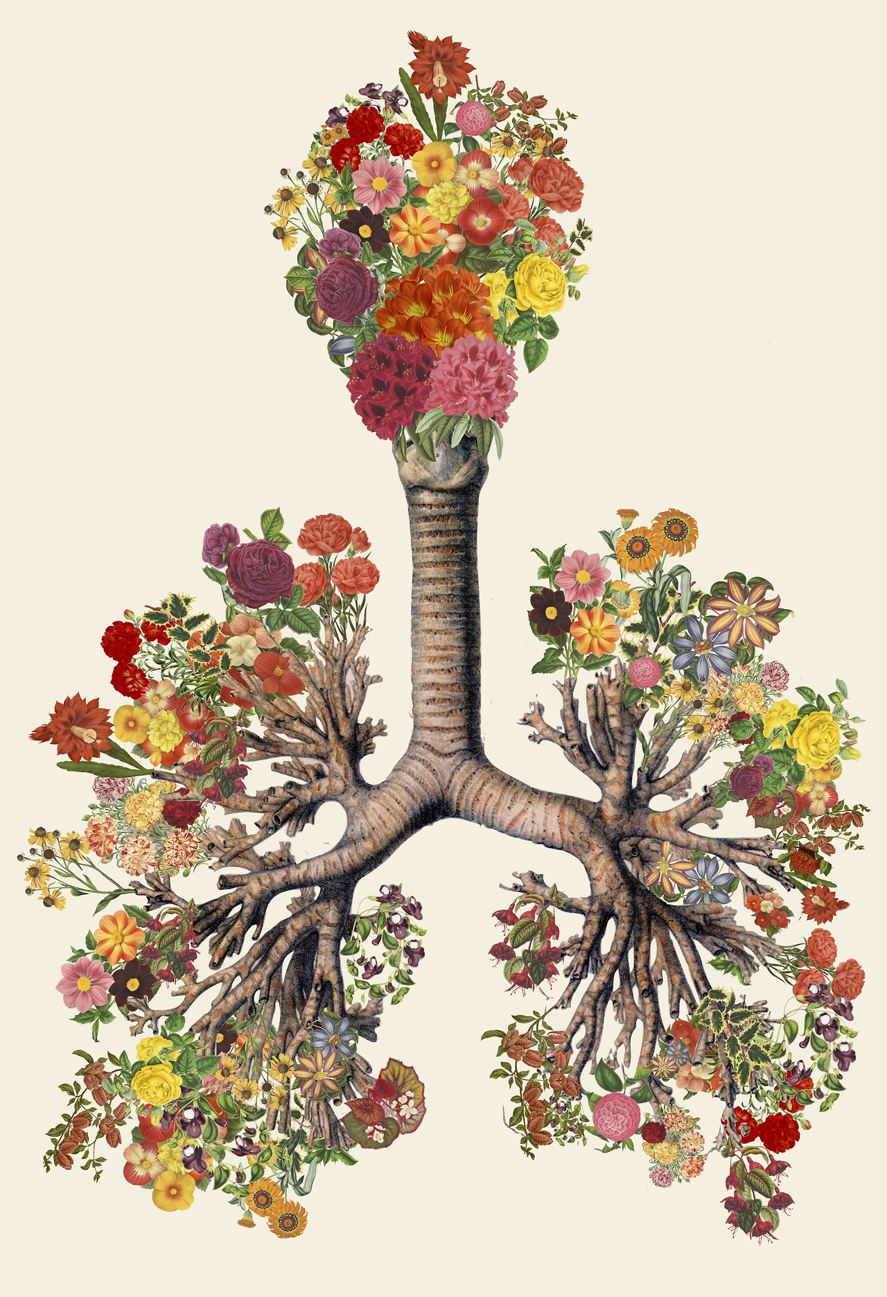 Anatomical Collages by Travis Bedel collage anatomy