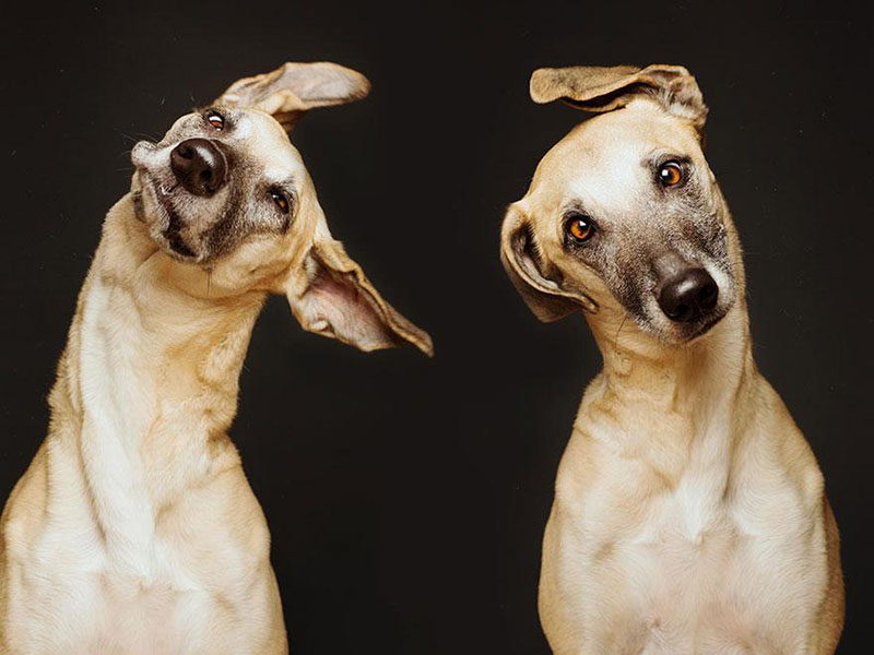 Absurdly Expressive Dog Portraits by Elke Vogelsang | Colossal