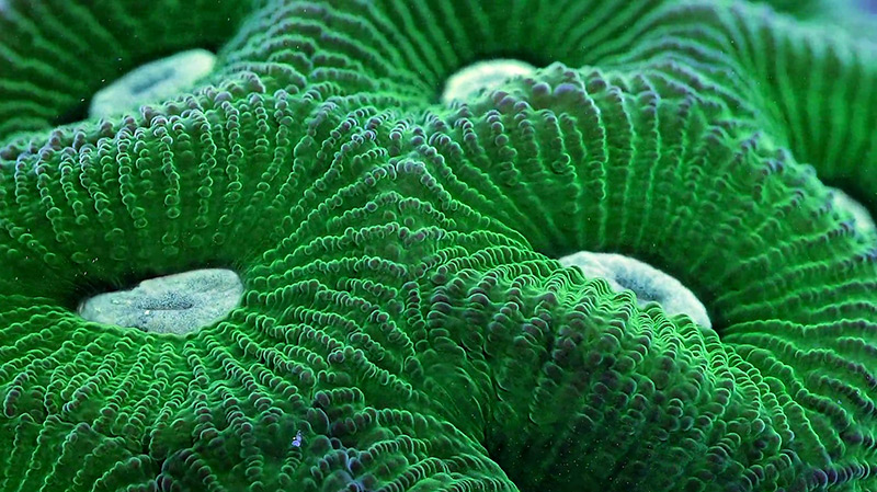 Slow Life: A Macro Timelapse of Coral, Sponges and Other Aquatic Organisms Created from 150,000 Photographs ocean nature macro