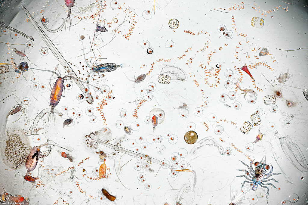 A Single Drop of Seawater, Magnified 25 Times | Colossal