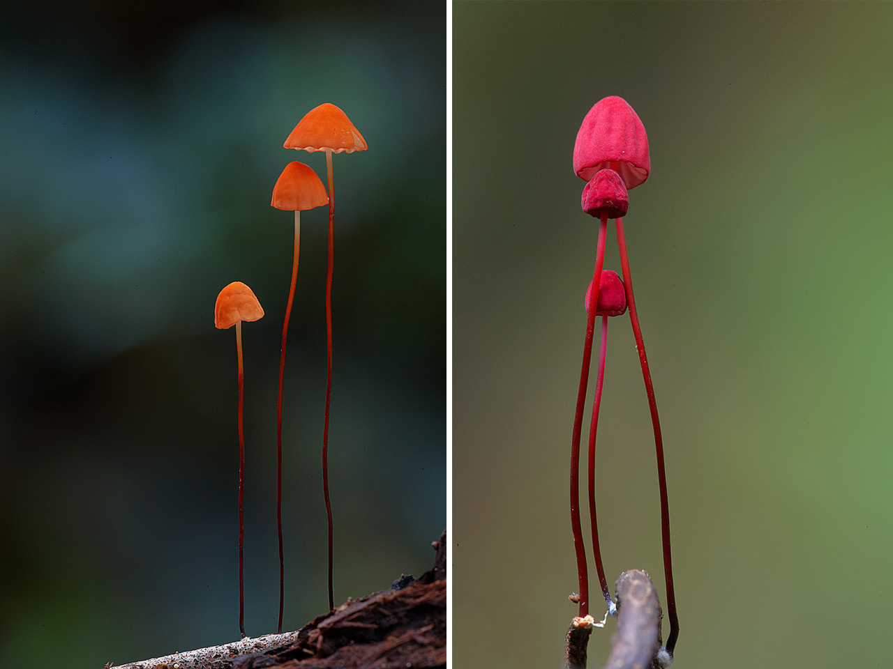 Fantastic Fungi: The Startling Visual Diversity of Mushrooms Photographed by Steve Axford | Colossal