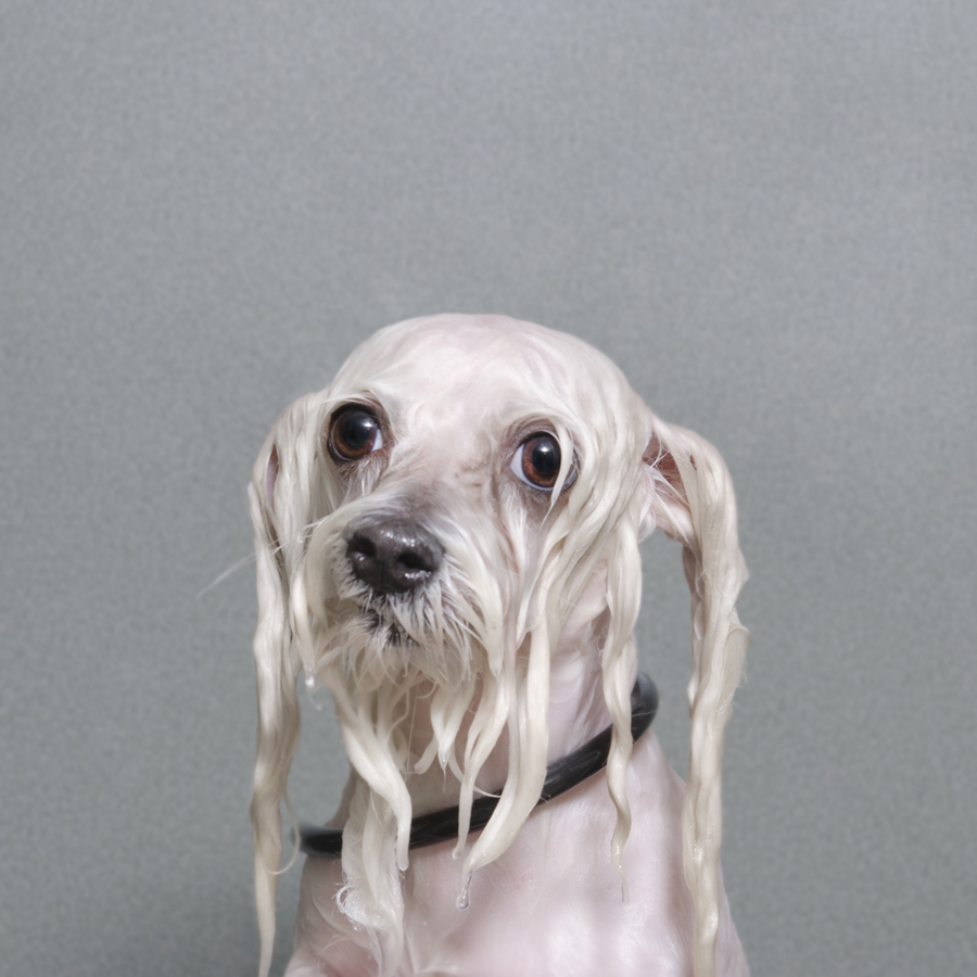 Wet Dog: Quirky Portraits of Dogs Captured Mid Bath by Sophie Gamand portraits humor dogs