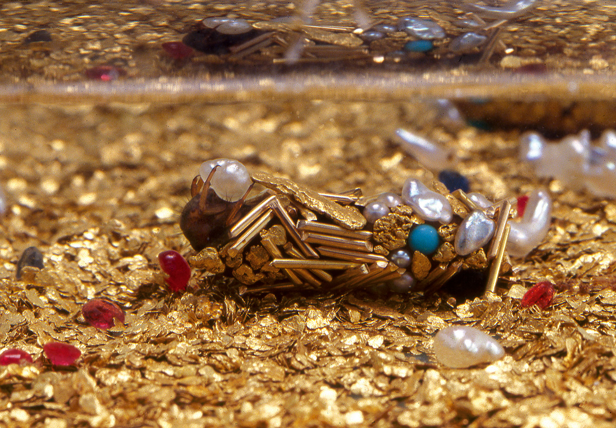 Artist Hubert Duprat Collaborates with Caddisfly Larvae as They Build Aquatic Cocoons from Gold and Pearls jewelry insects gold