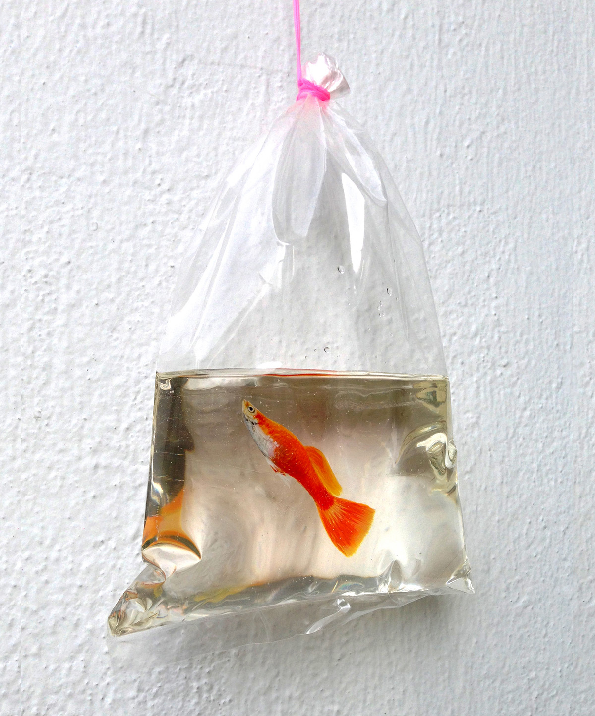 New Aquatic Wildlife Painted in Layers of Resin by Keng Lye resin painting fish