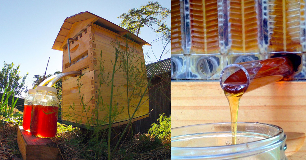 honey on tap  a new beehive that automatically extracts