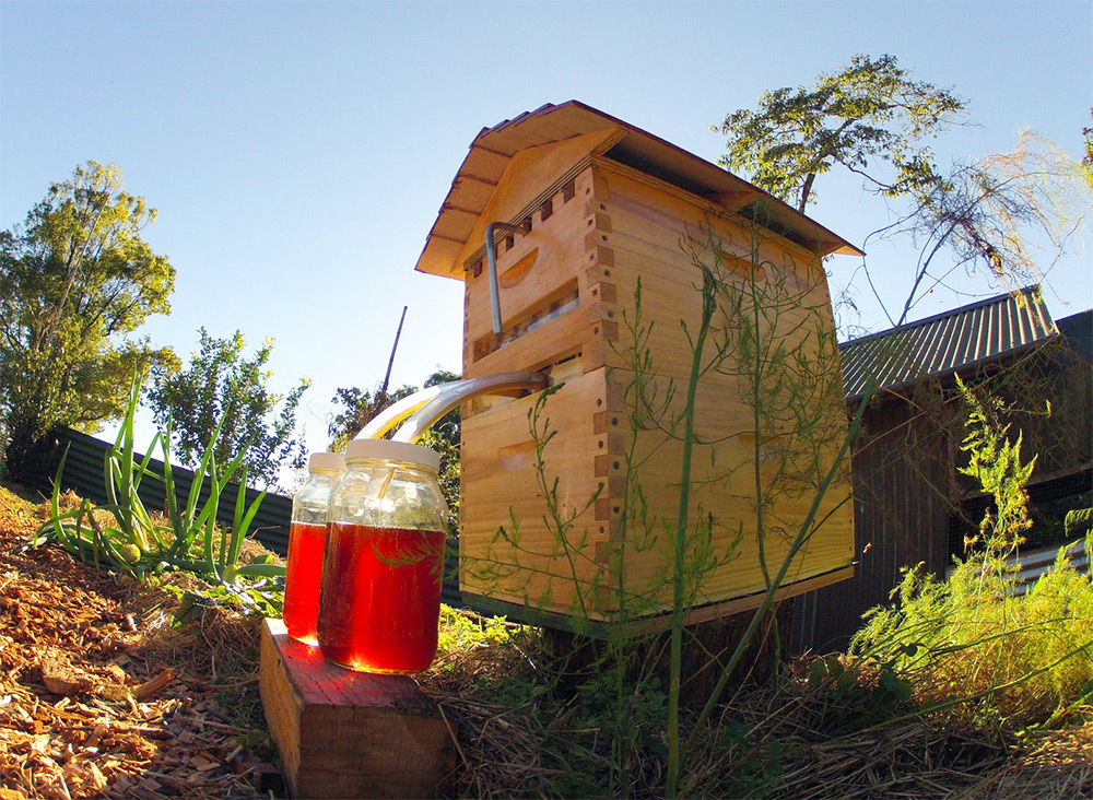 Set Up Your Beehive | Beginner's Guide To Keeping Bees