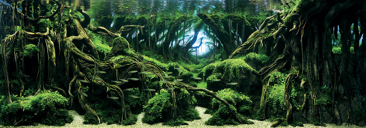 ... Aquatic Plants Layout Contest by Christopher Jobson on October 8, 2015