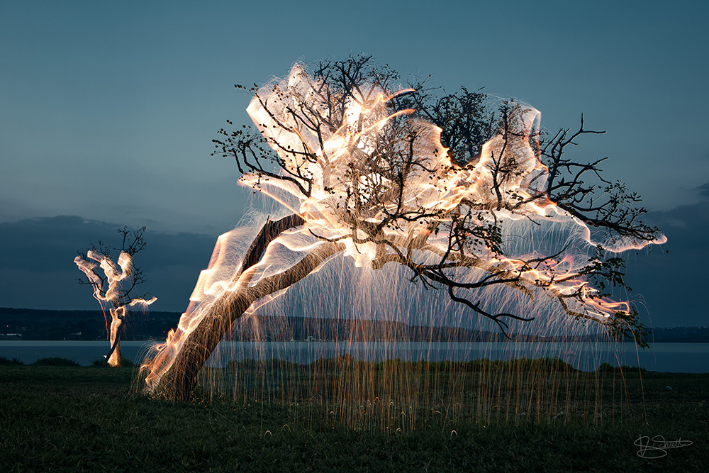 Light Appears to Drip from Trees in these Long-Exposure Photos by Vitor Schietti | Colossal