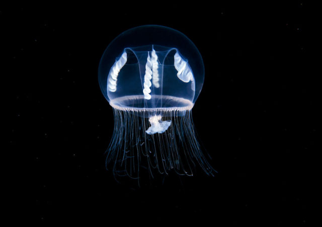 Alexander Semenov Continues to Photograph the Earth's Most Fragile Marine Wildlife Near the Arctic Circle