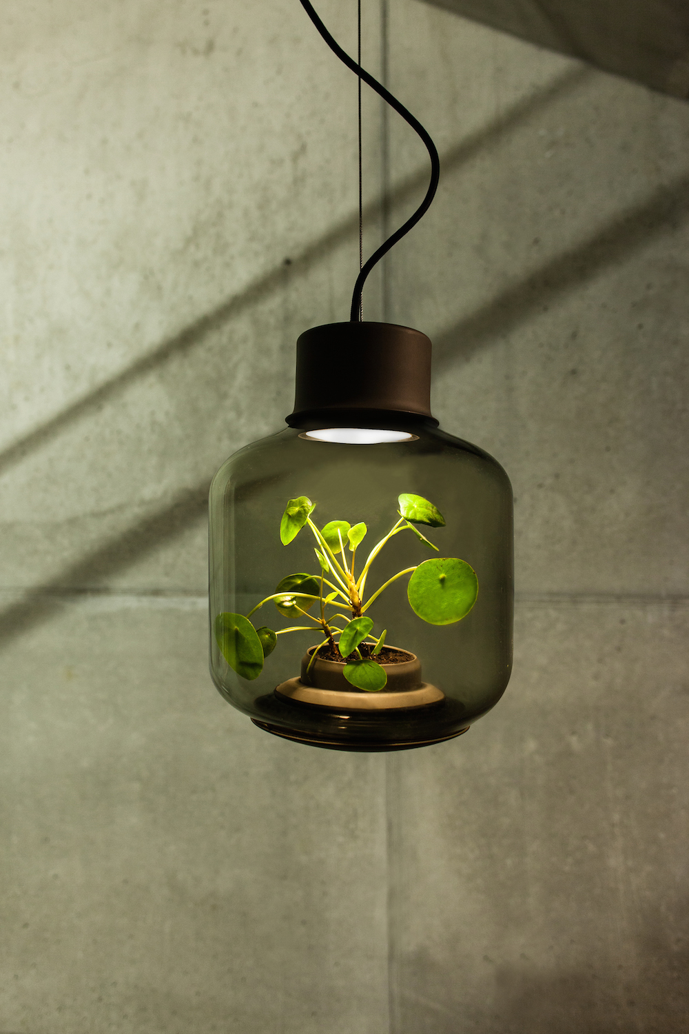 Terrarium Lamps By Nui Studio Light