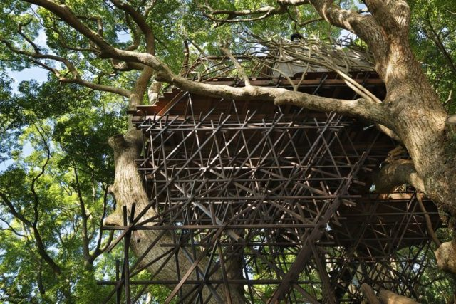 A Bird's Nest Tearoom Perched Atop a 300-Year-Old Camphor Tree in Japan