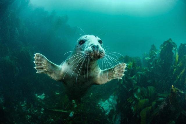 Winners of the 2016 British Wildlife Photography Awards