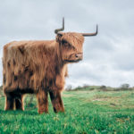 Photos of Animals Retouched to Look Like Real-Life Minecraft Creatures
