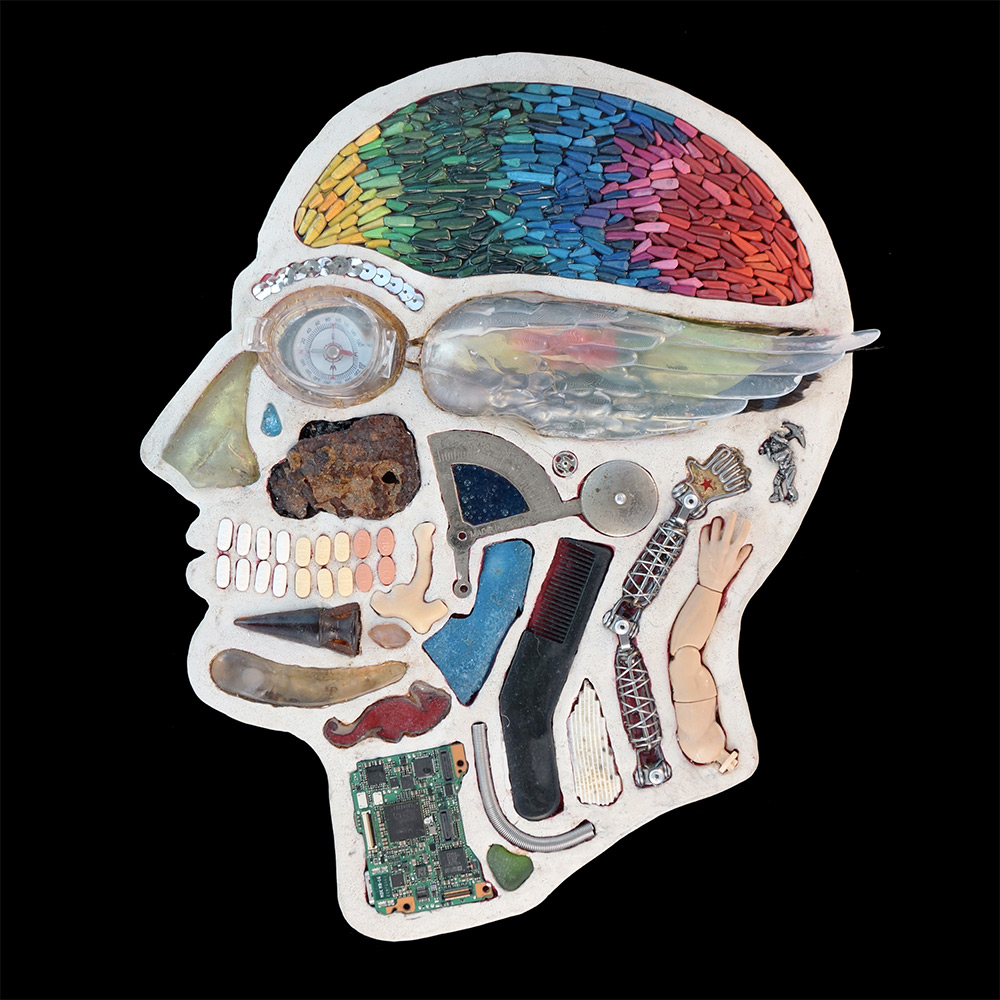 Anatomical Cross Sections Of Human Heads Reveal A Menagerie Of Found