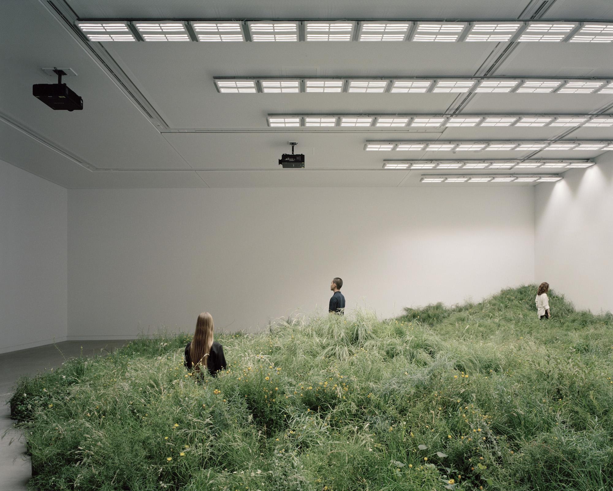 Indoor Installation of 10,000 Plants Considers Relationship Between Endangered Australian Grasslands and Architecture