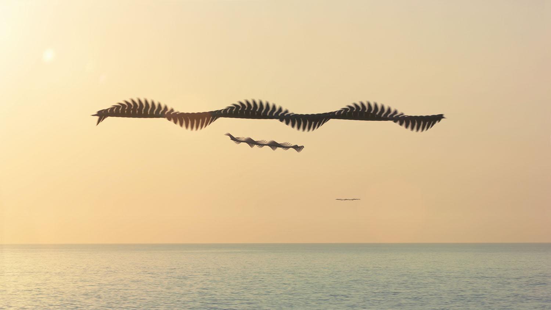 Bird Flight Patterns Amazing Design Inspiration
