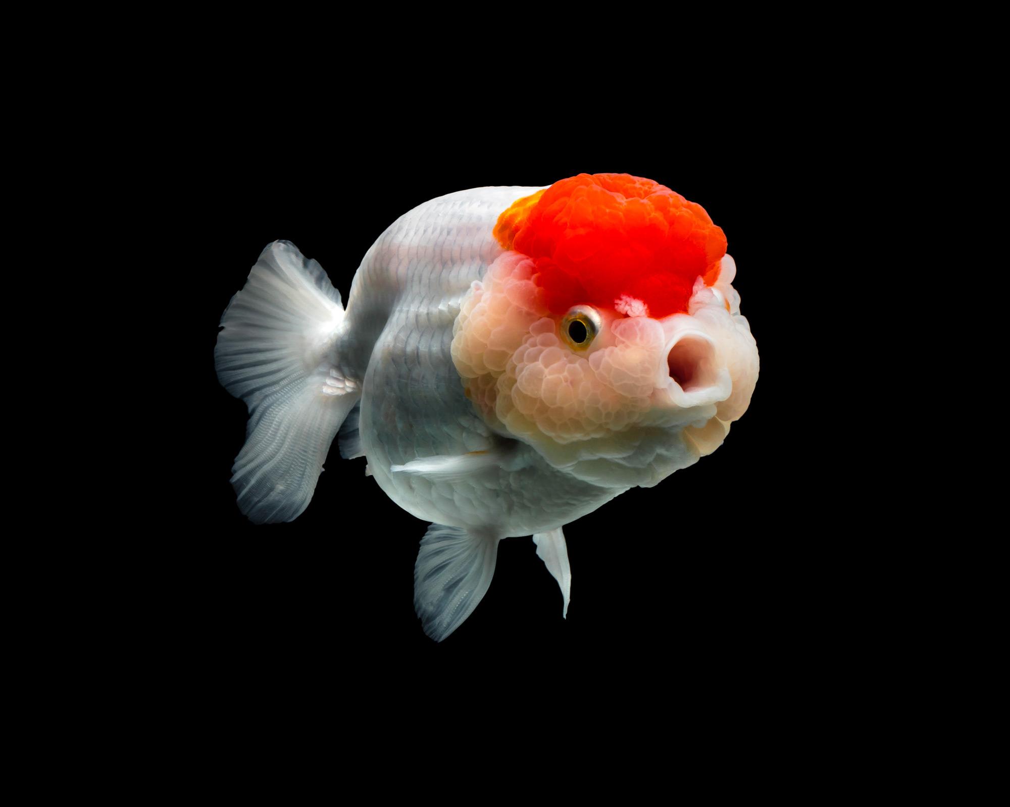 fish | Colossal
