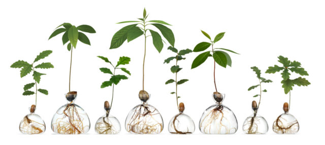 Sprout Oak and Avocado Trees on Your Windowsill with Ilex Studio's Specially Designed Glass Vases