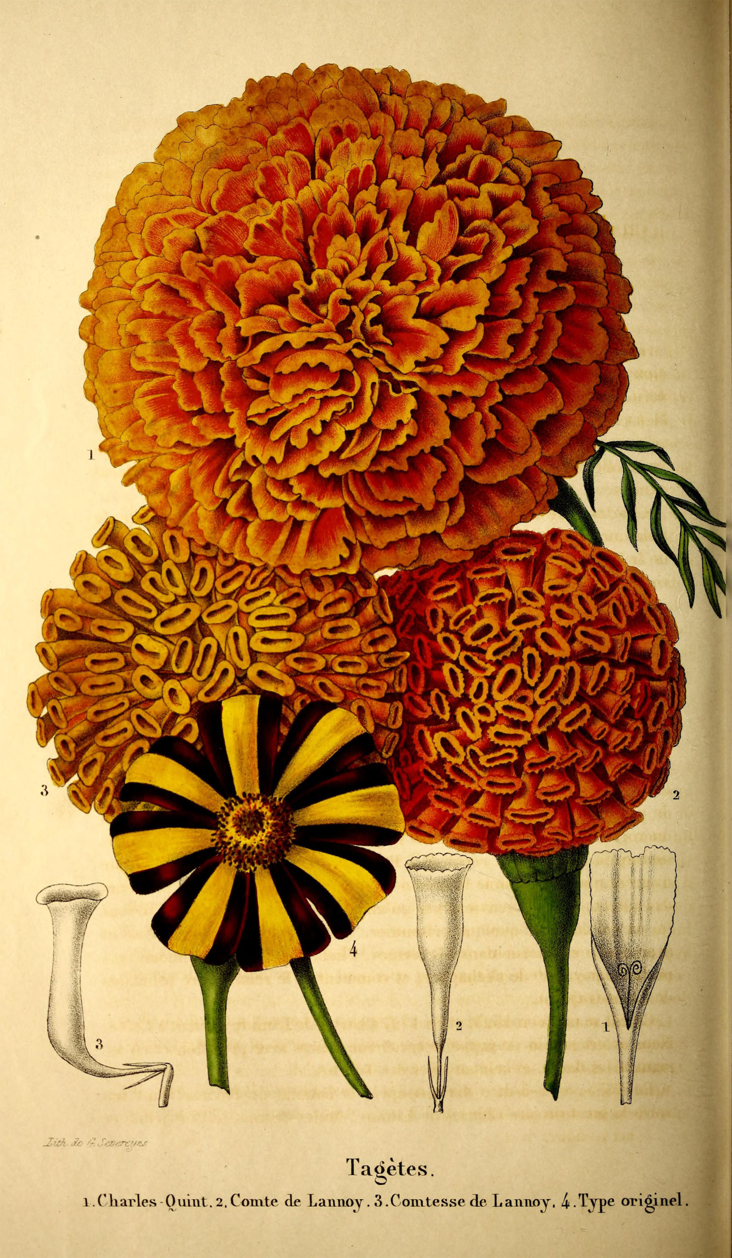 150,000 Botanical and Animal Illustrations Available for Free Download from Biodiversity Heritage Library