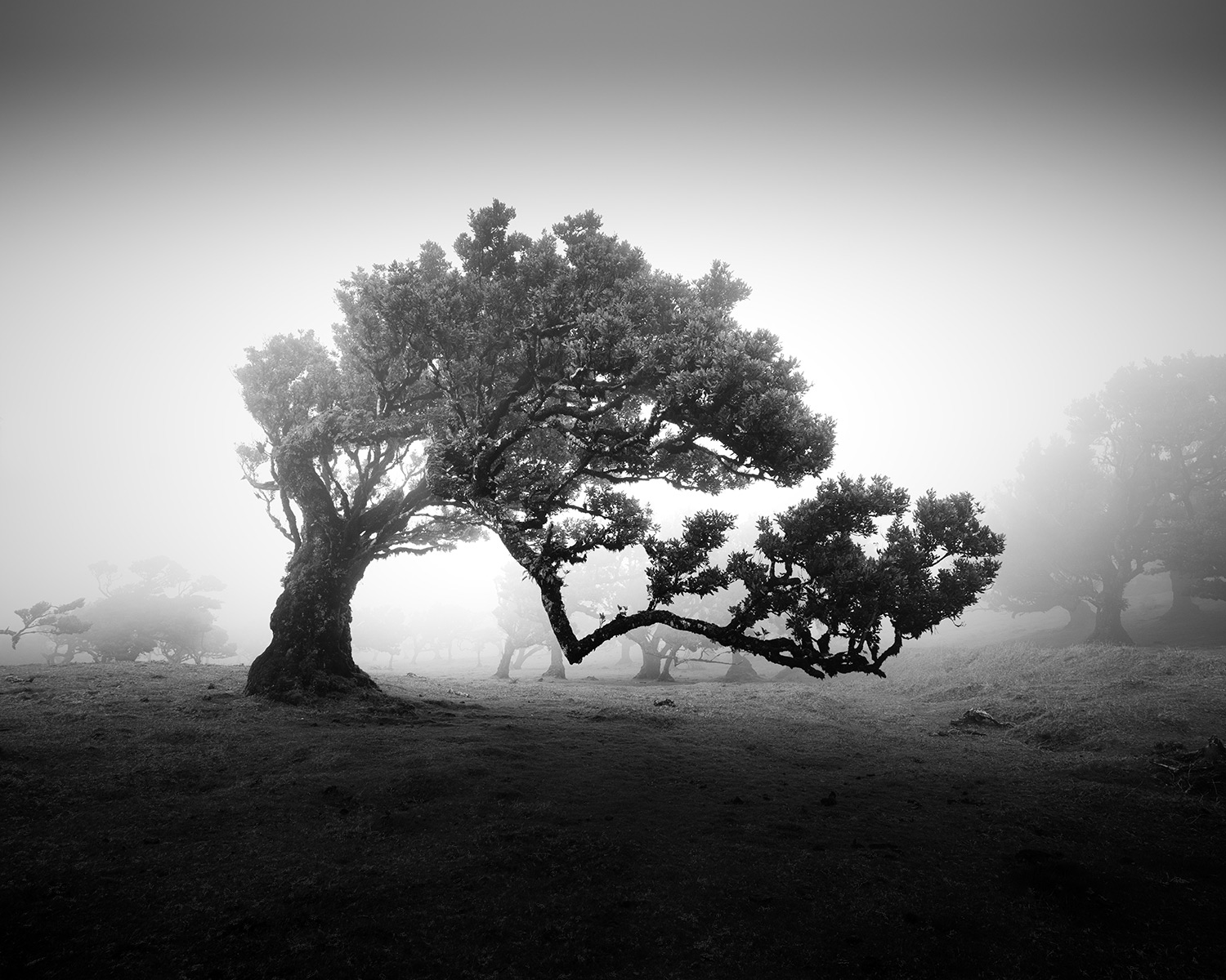 Bare Tree Branches Captured in Layers of Eerie Morning Fog by Michael Schlegel