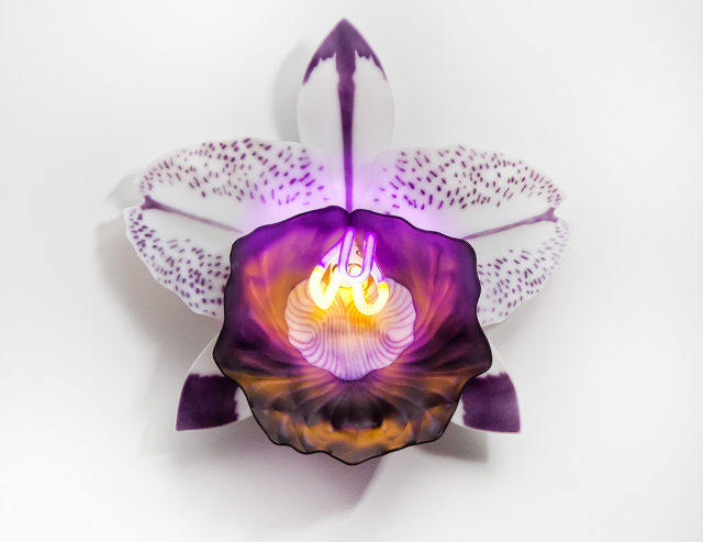 Neon-Illuminated Glass Orchids by Laura Hart Consider the Flowers' Fragility and Resiliency