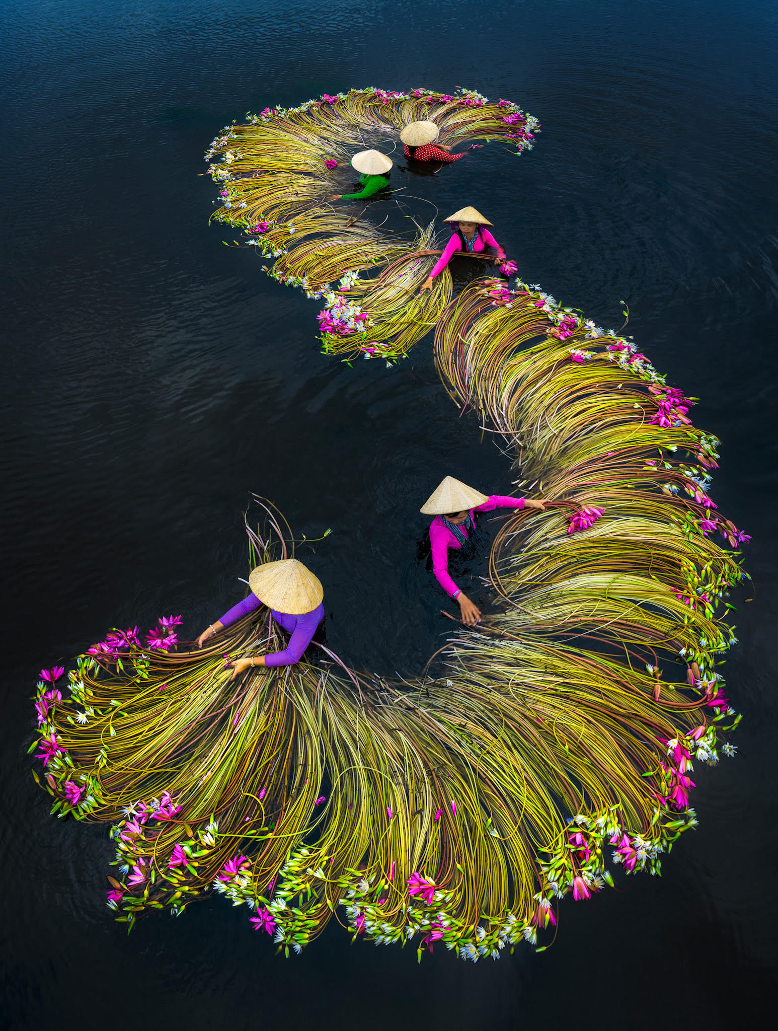 Vivid Photographs by Trung Huy Pham Capture Annual Water Lily Harvest in Vietnam