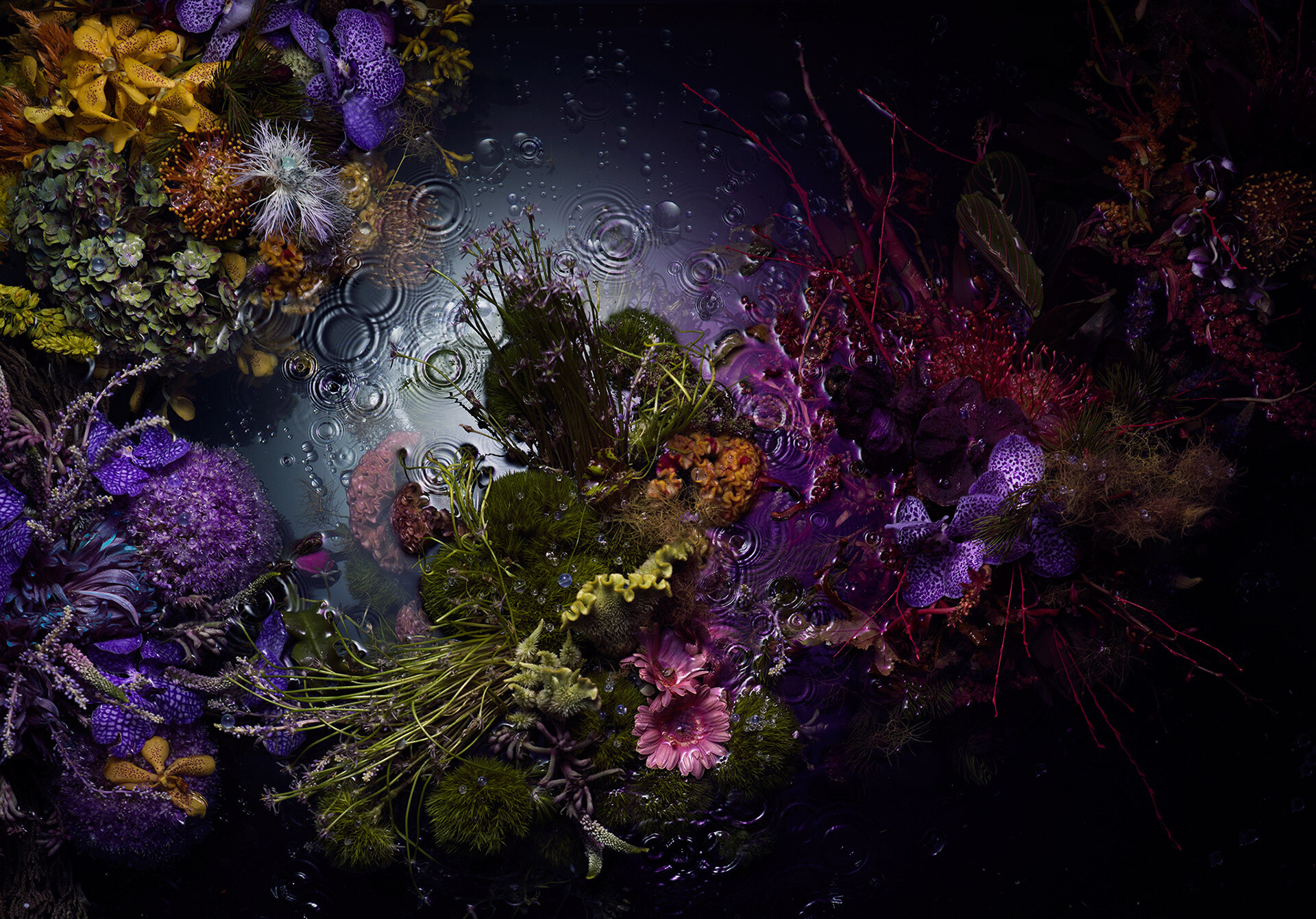 A photo of a bunch of flowers floating on top of a dark pool of water with some droplets in the water as if it's starting to rain.