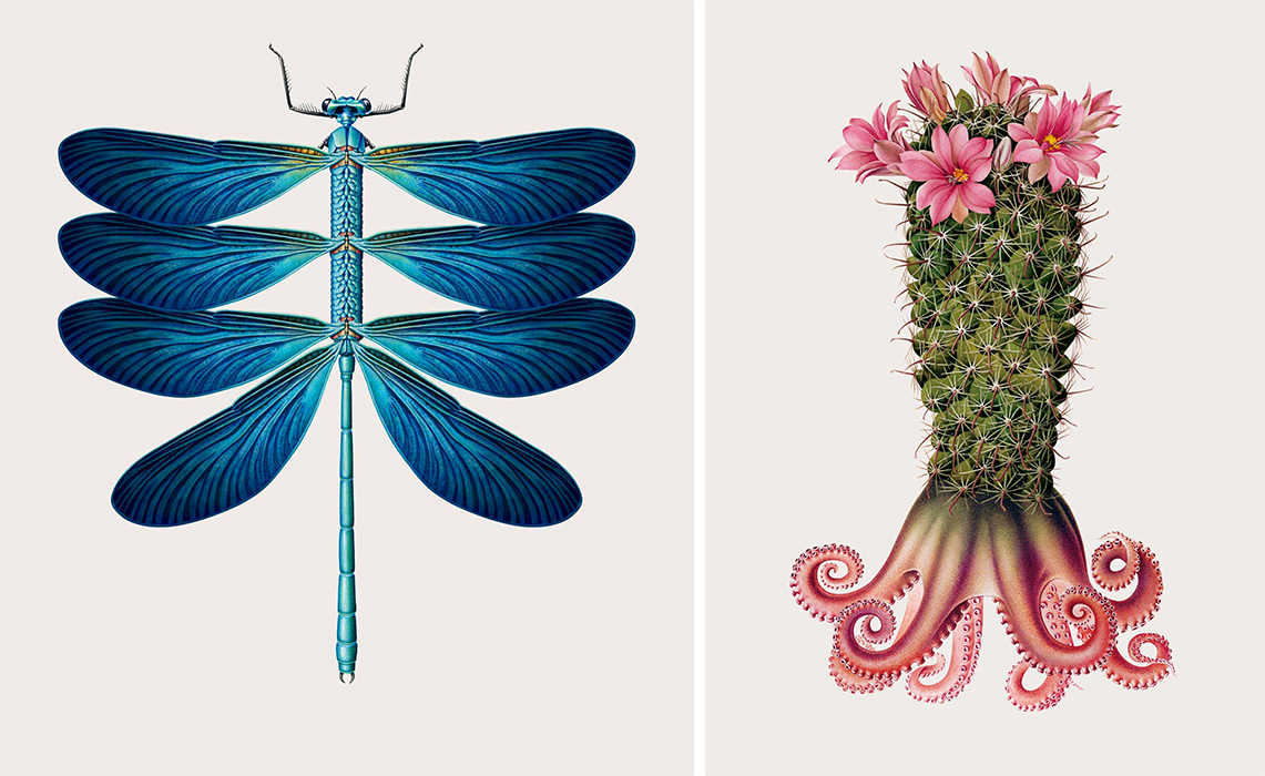 Vintage-Style Illustrations Merge Animals, Insects, and Botanics to Form Bizarre Hybrid Creatures
