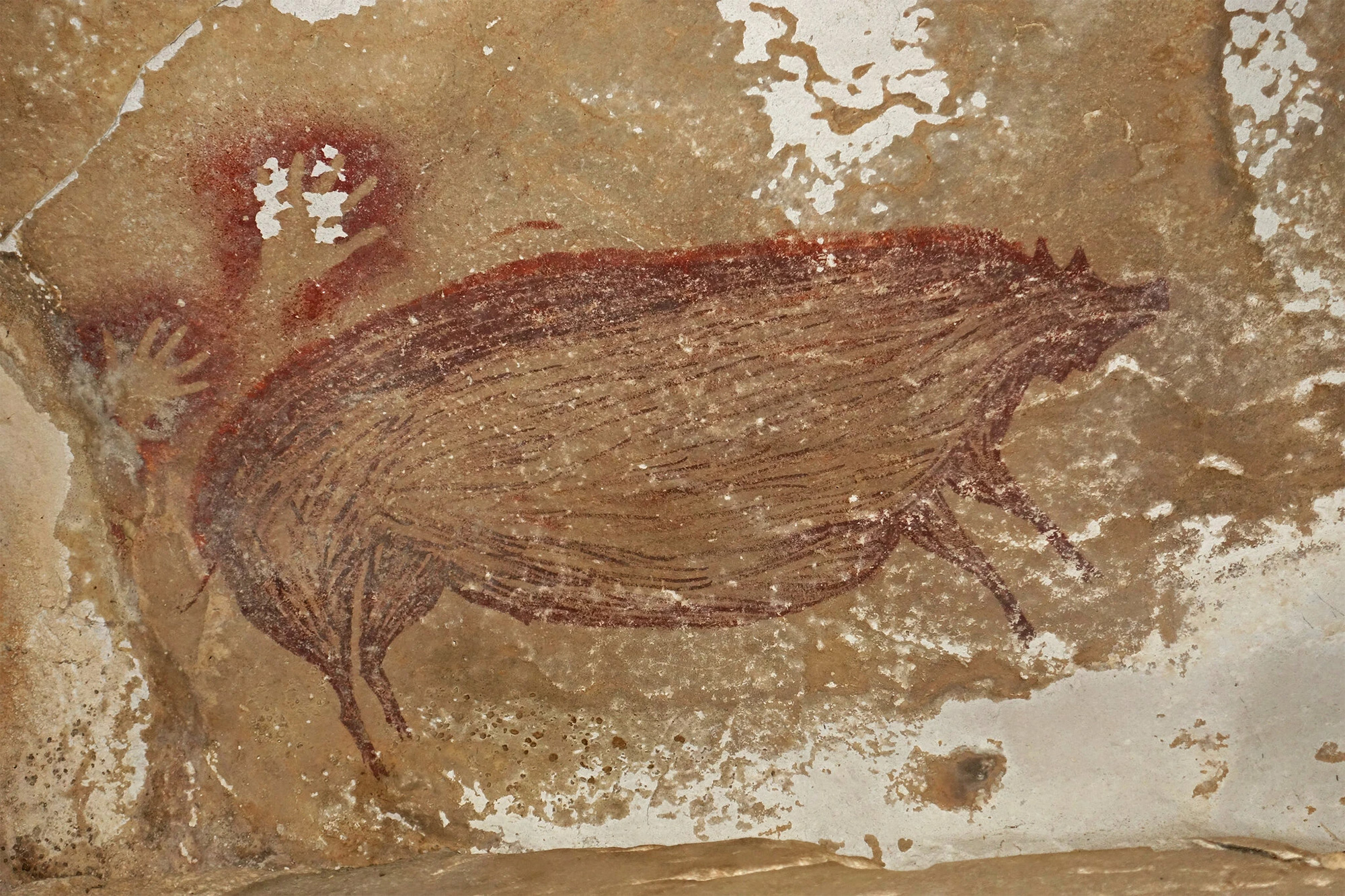 This Warty Pig Painting Is Thought To Be the Oldest Cave Art in the World