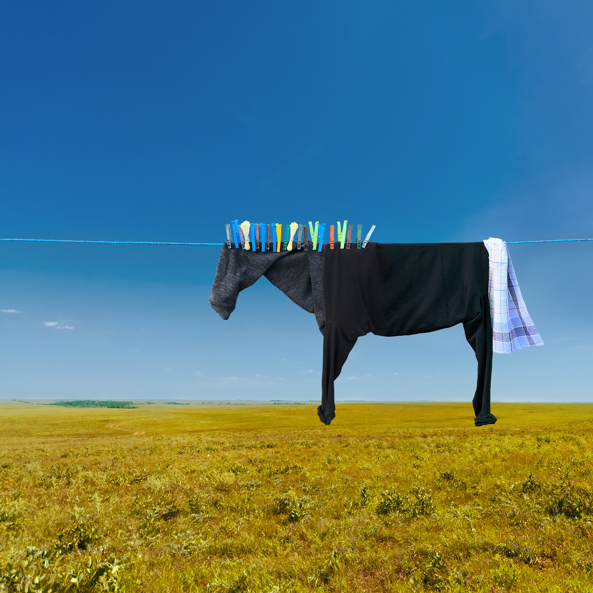 A photo of some clothes on a clothesline in a field on a sunny, blue-sky day. The clothes are arranged to look like a horse standing in profile, with clothespins along the top of the head and neck to look like the hair.