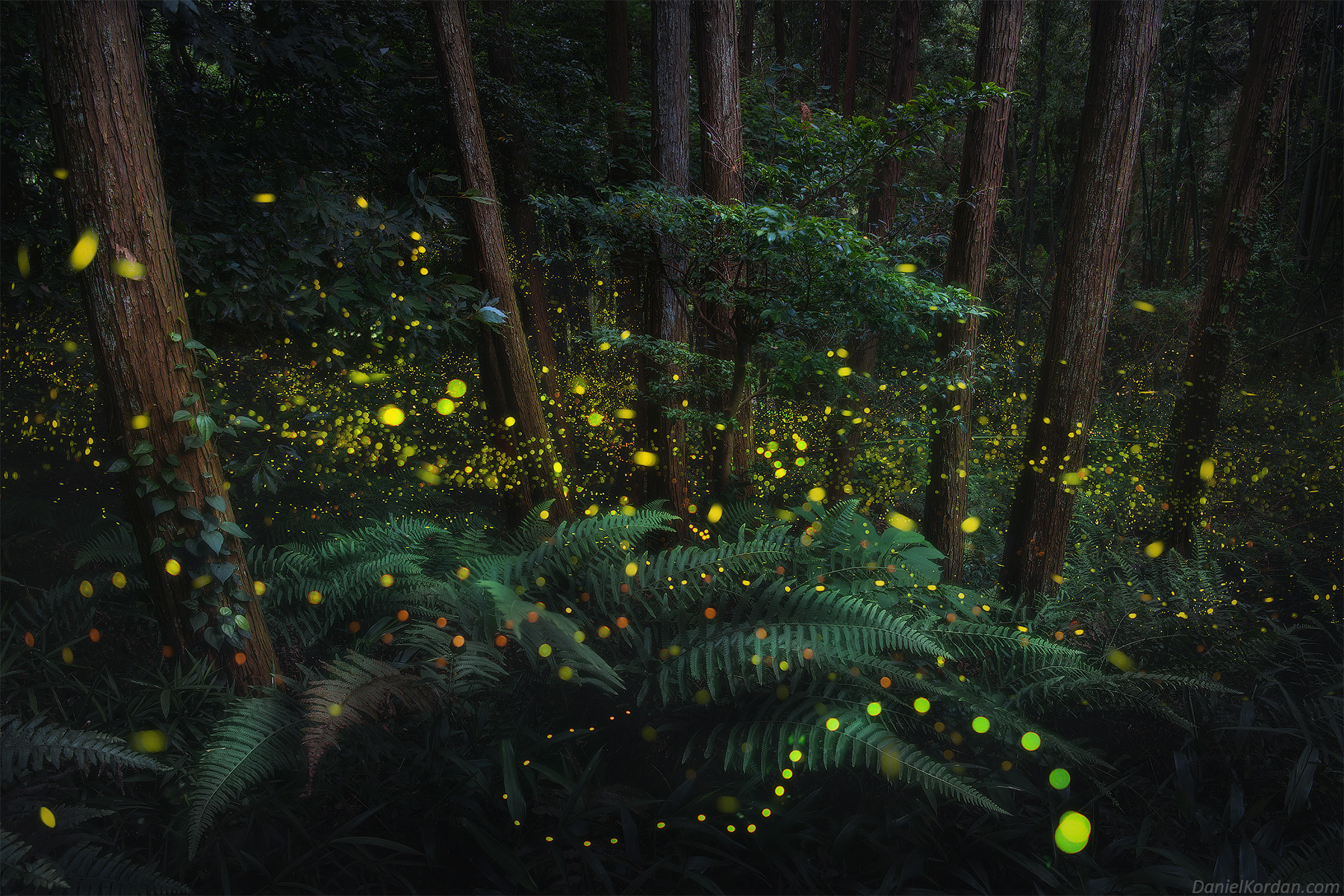 A Dazzling Series of Photos Captures the Soft Glow of Firefly Mating Season in Japan