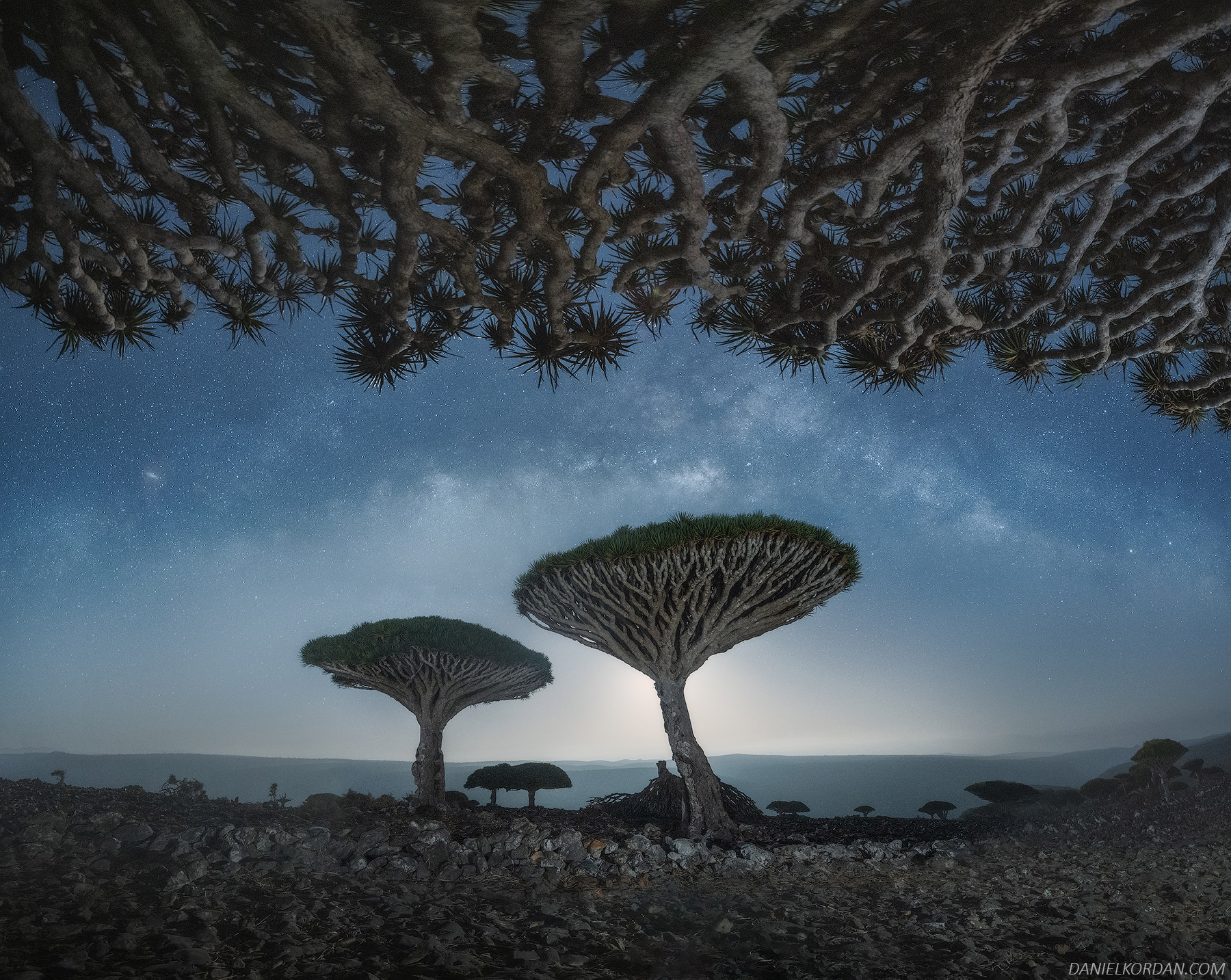 A Magical Series Captures the Gnarled Branches of Socotra's Dragon Blood Trees