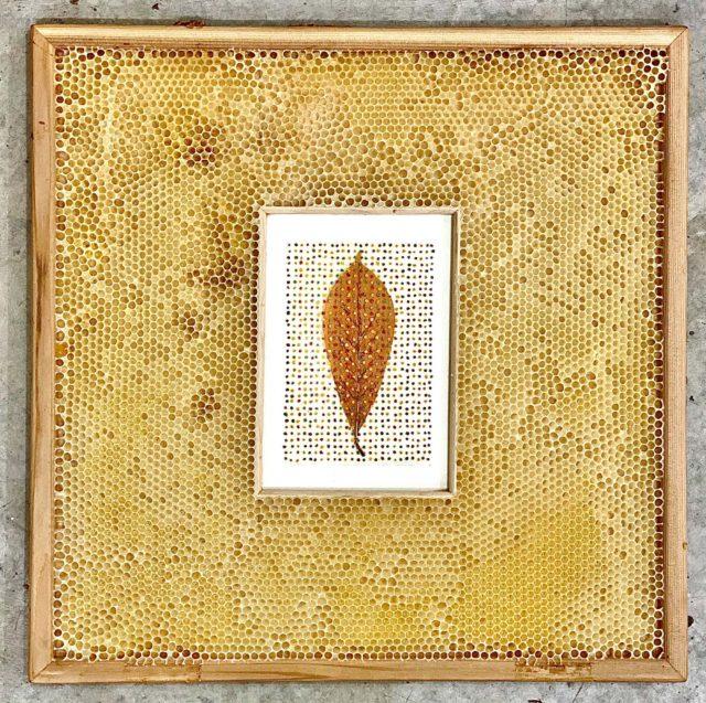 Bees Embed Ava Roth's Organic Mixed-Media Artworks in Waxy Honeycomb